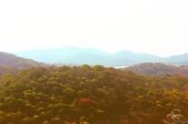 Sanjay Gandhi National Park1