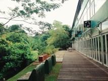 House Dempsey Hill nature greenery