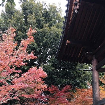 Japan Kyoto winter Autumn nature colourful scenery outdoors
