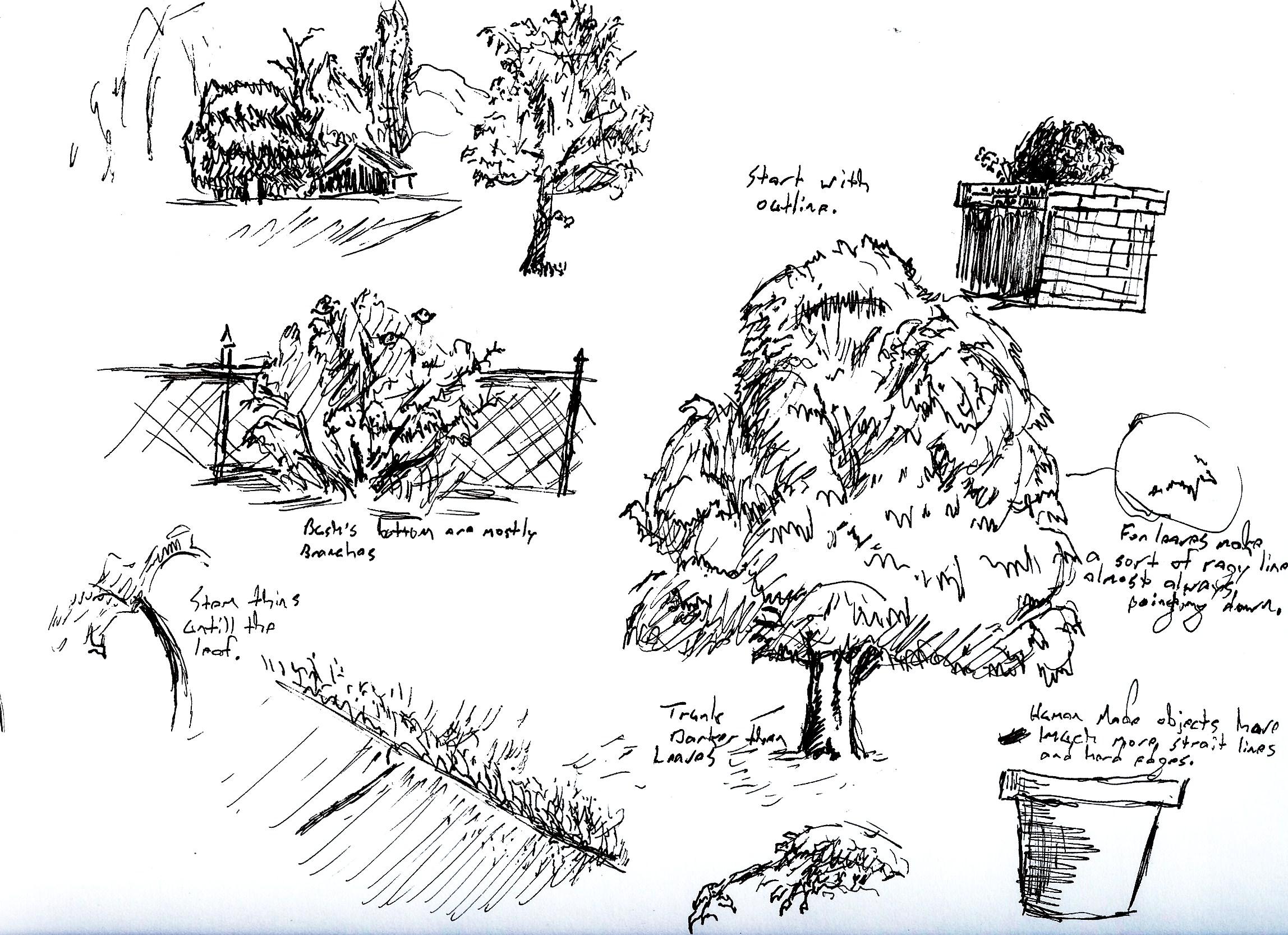 Bushes Drawing