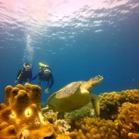 Adventure-Filled and Romantic Destinations for Your Next Diving Getaway