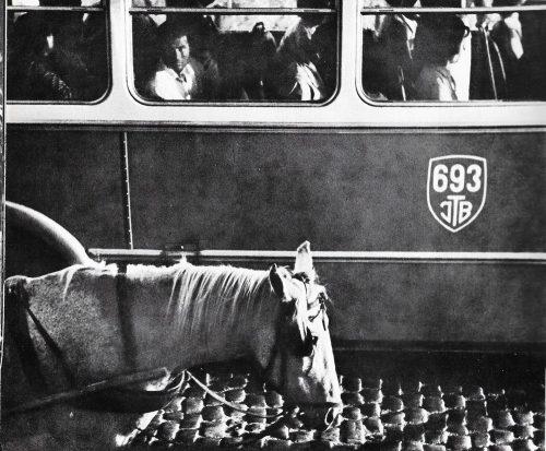 In Bucureștiul anilor '50, autobuzele și trăsurile conviețuiau... pașnic! Foto: George Șerban