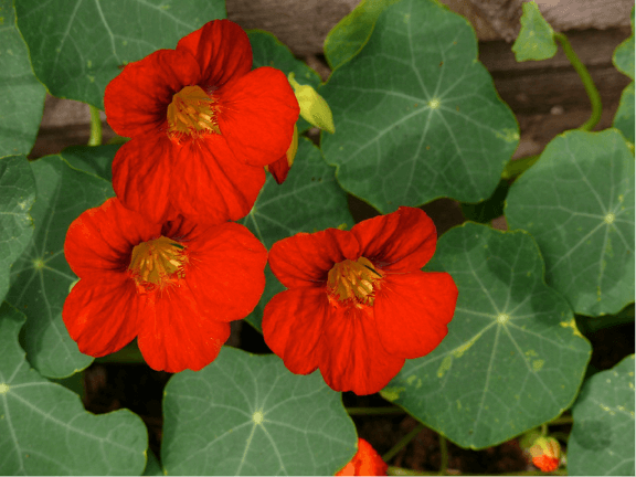 grow flower in Tower Garden