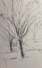 Adriana Burgos, Sketchbook study of trees in pen
