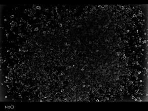 NaCl. Fotograma: sal grosso sobre papel fotográfico. 2014.