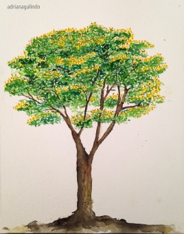 Sibipiruna, árvore/tree 19, aquarela / watercolor, 21 x 15 cm. Sold