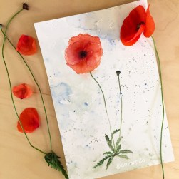 Papoula / Poppy , aquarela / watercolor