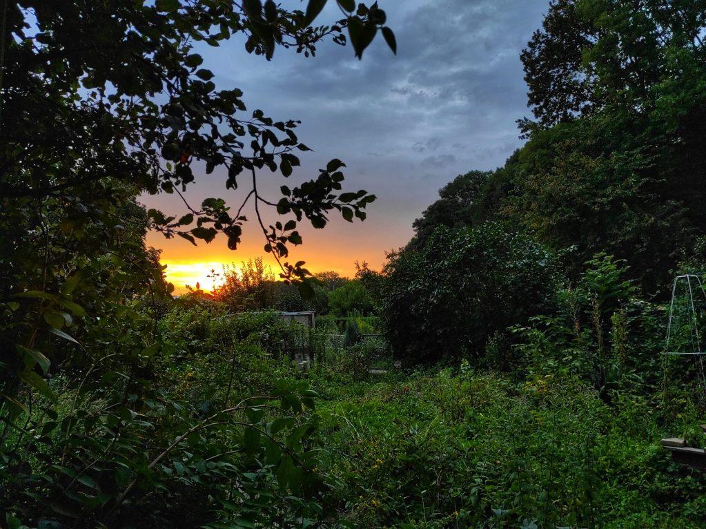 Lee más sobre el artículo Jardines en Alemania: ¡en la naturaleza!