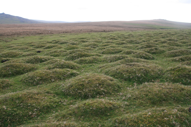 Thufur  A Dartmoor blog