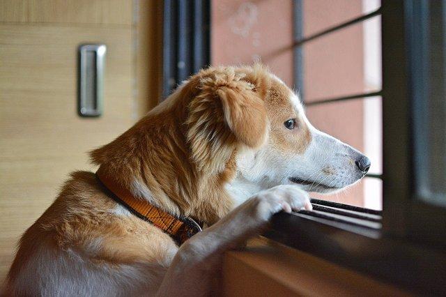 sad ignored dog