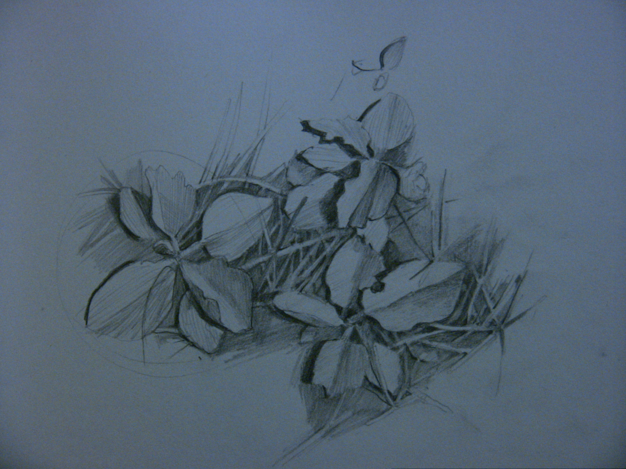 Drawings made in Thunder Bay