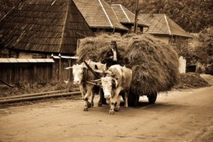 Satul românesc