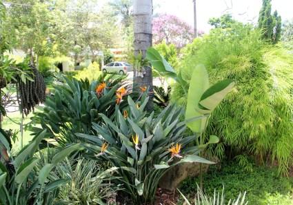 Bamboo Strelitzia Vinhedo