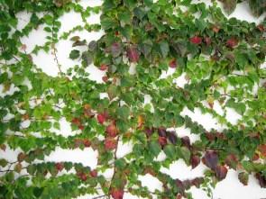 adriano-gronard-paisagismo-falsa-vinha-top-jardim