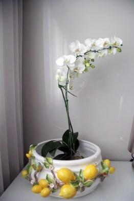 adrianogronardphoto-adriano-gronard-paisagismo-vaso-faiança-limão-orquidea