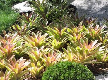 bromelia-adriano-gronard-paisagismo-colorido-jardim