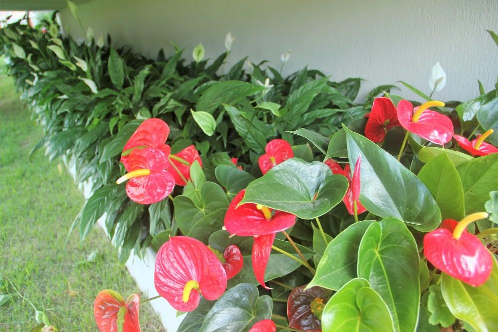 Dormir melhor essas plantas podem te ajudar adriano - Plantas de flores para interiores ...