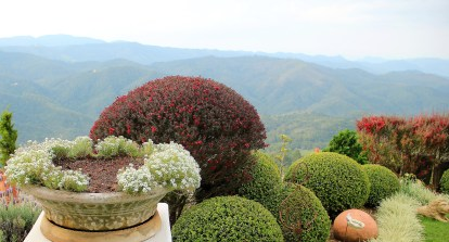 Nesta foto , podemos ver a érica-japonesa podada de duas formas. À esquerda, com técnicas de topiaria,,mimetizando os buxinhos abaixo. À direita, formando uma cerca viva. Imagem: Adriano Gronard