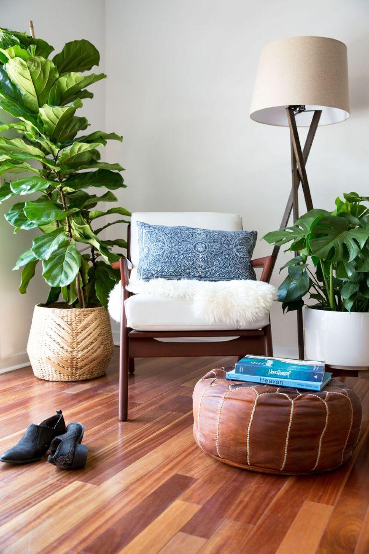 Ficus lyrata e Monstera deliciosa (costela de Adão) enriquecem esta sala com cor, textura e formas!