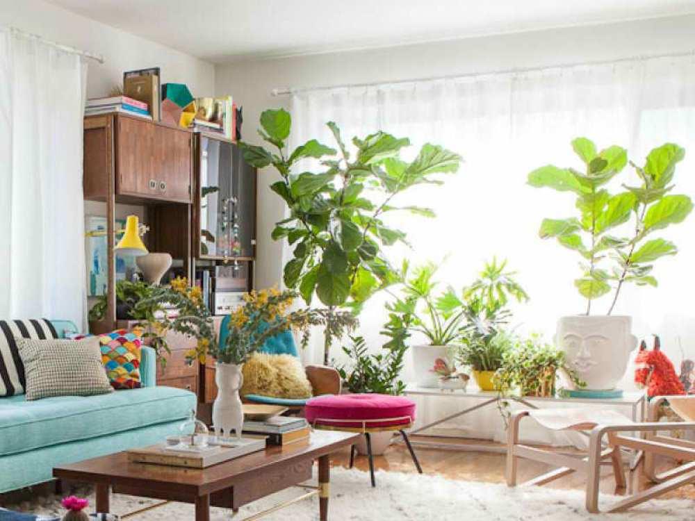 Sala repleta de plantas e vida!