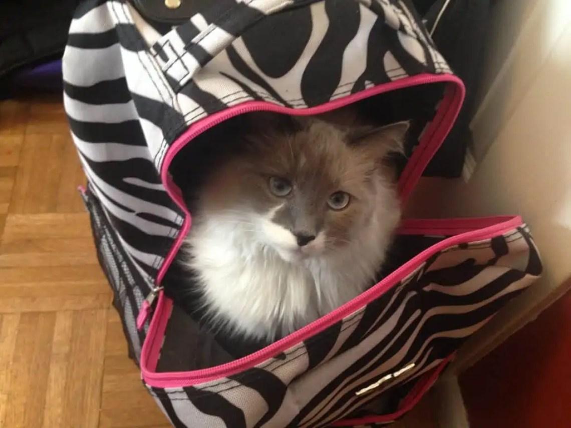 Yeti in my laptop bag