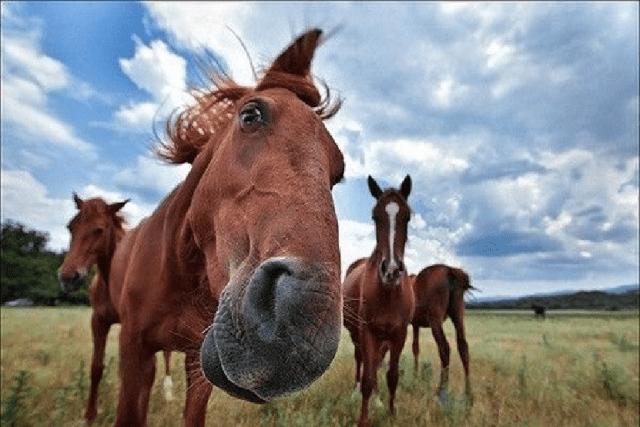 ai sărit calul ai BAN