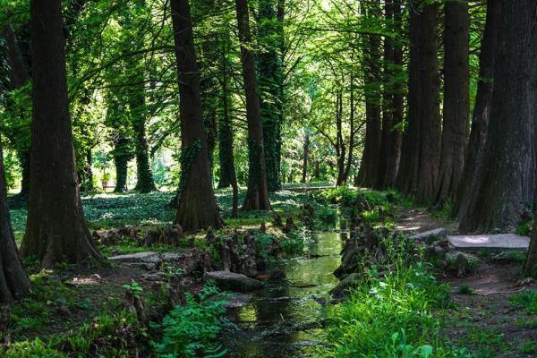 Foto în grădina botanică