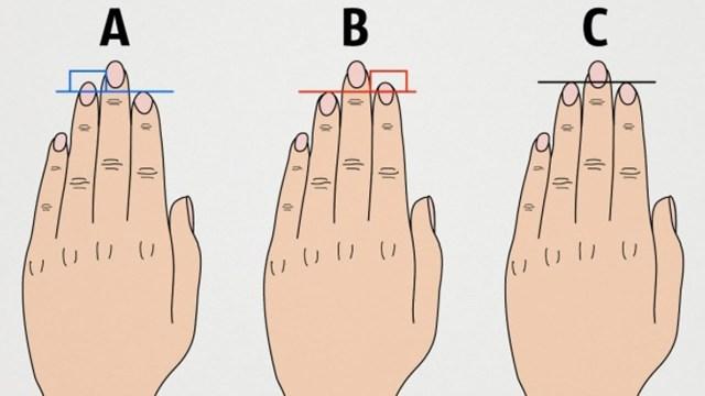 lungimea degetelor