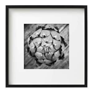 The Globe Artichoke, Framed Monochrome Prints