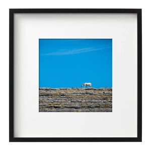Horse on a Rock - The Burren