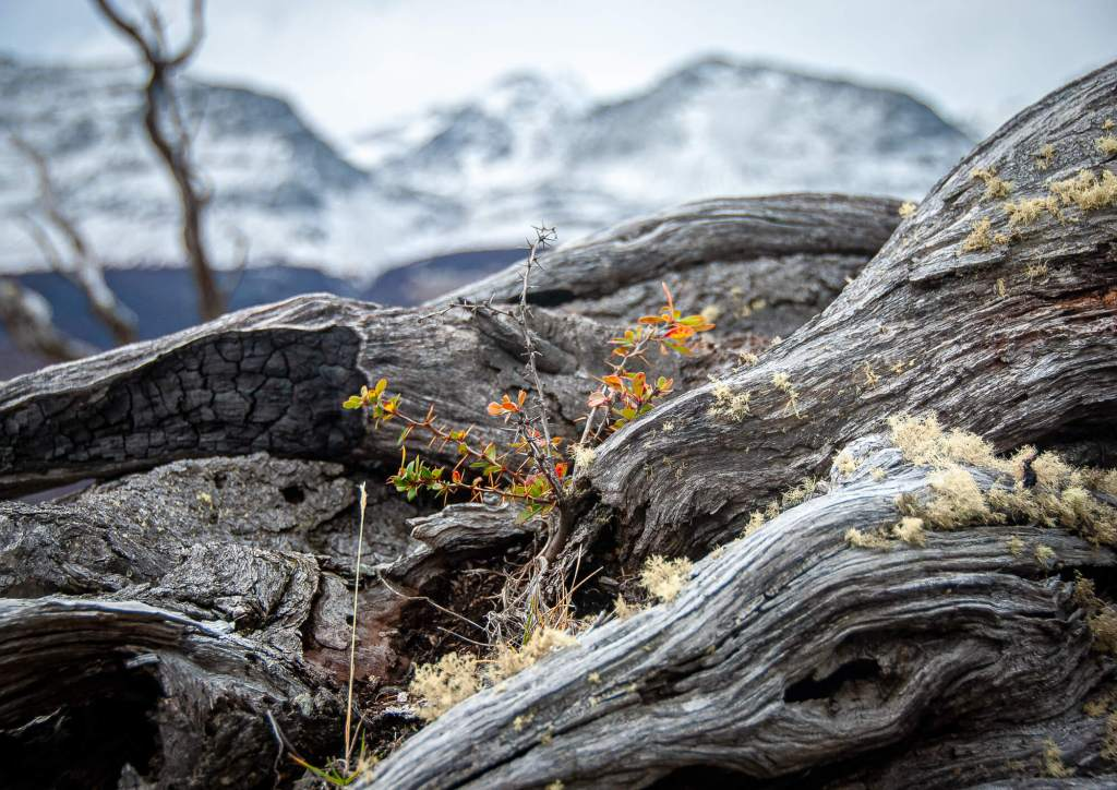 Southern Patagonia Sheltered Plant On Log