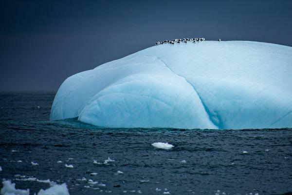 East Greenland Iceberg Bird Sanctuary