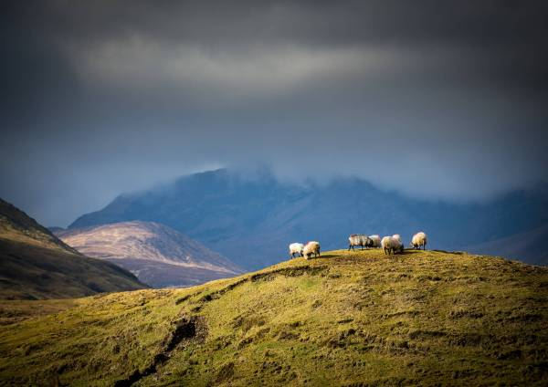 Sheep Hilltop Clouds Mountains Mayo