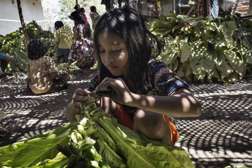 La industria del tabaco en Indonesia emplea a niños que están intoxicados por la nicotina