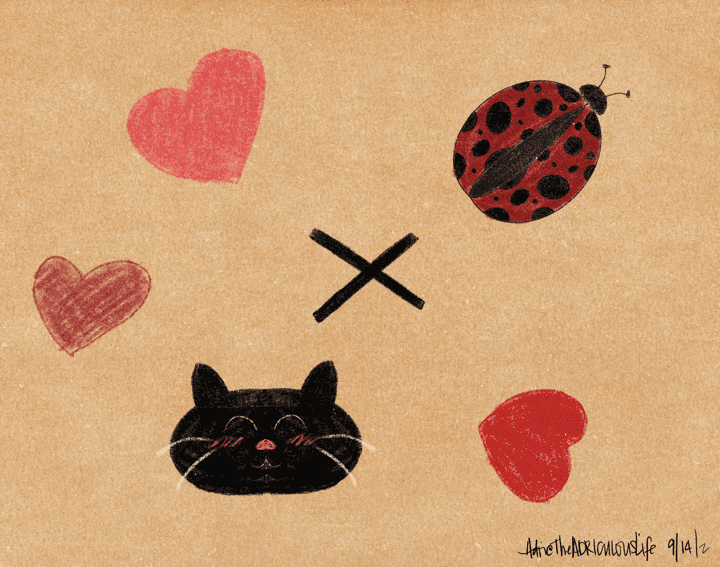 The Ladybug and Her Black Cat