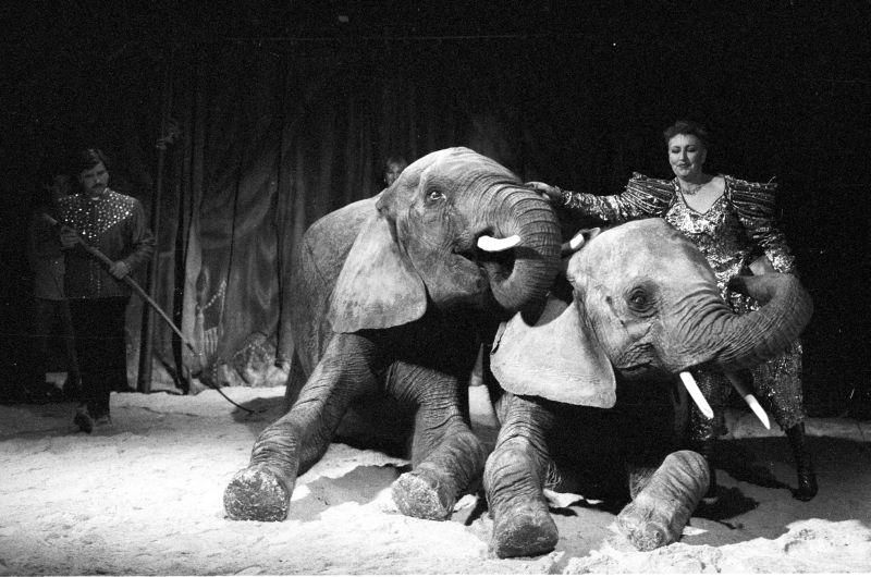 Lear_éléphants