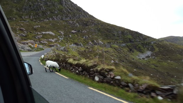 Oh, did I not mention the road was also covered in livestock?