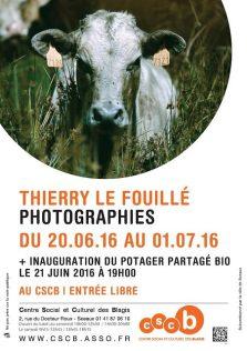 Affiche expo les vaches au CSCB
