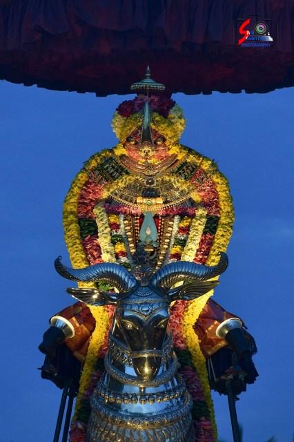 நல்லூர் கந்தசுவாமி ஆலய 15 ம் நாள் உற்சவம் 16