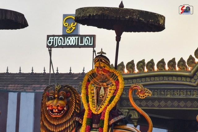 நல்லூர் கந்தசுவாமி ஆலய 16 ம் நாள் உற்சவம் 5