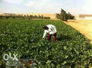 ارض للبيع امام المنتجع الاسيوطى قريبه من الارياف مياه متوفره 24 ساعه