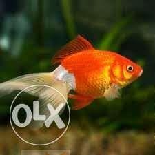 حوض سمك متوسط..