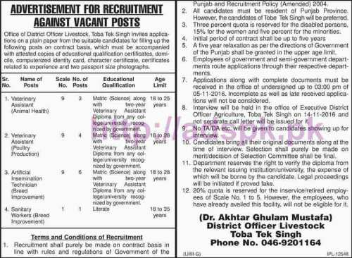 New Career Jobs Livestock Department District Toba Tek Singh Jobs for Veterinary Assistant Artificial Insemination Technician Sanitary Workers Application Deadline 05-11-2016 Apply Now