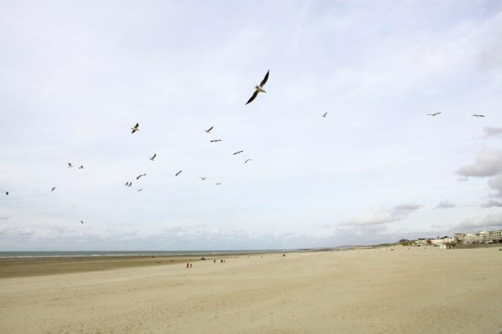 Mouettes, plage