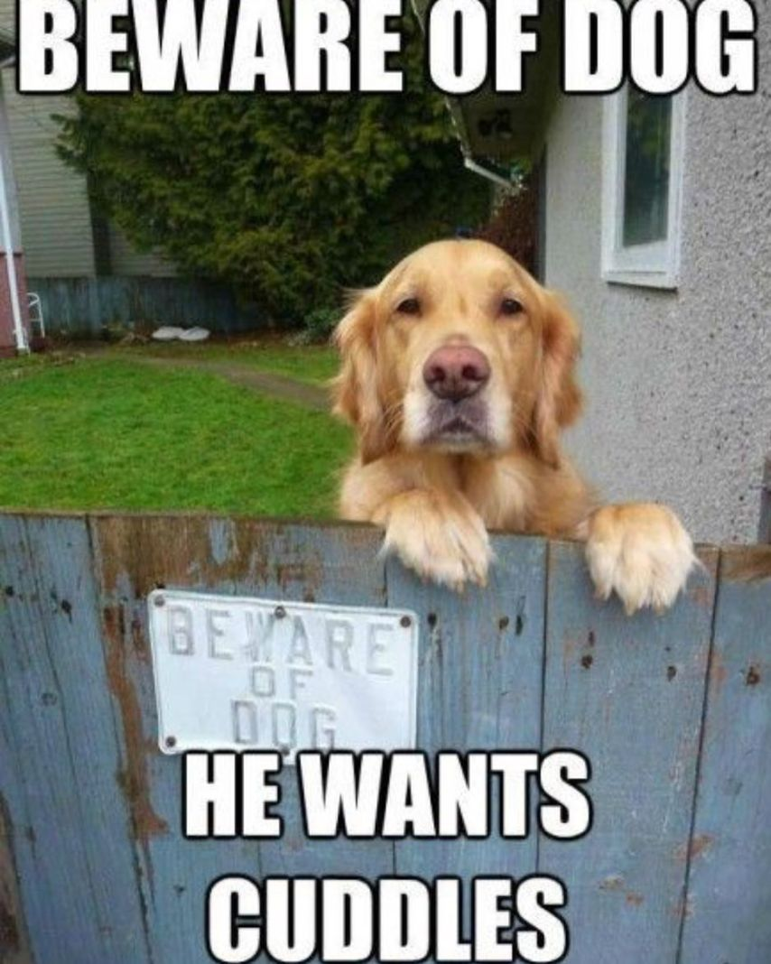 beware of dog sign meme