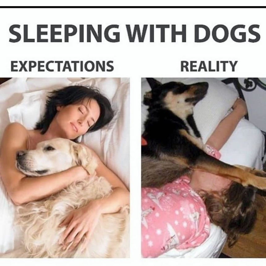 crazy dog owner memes