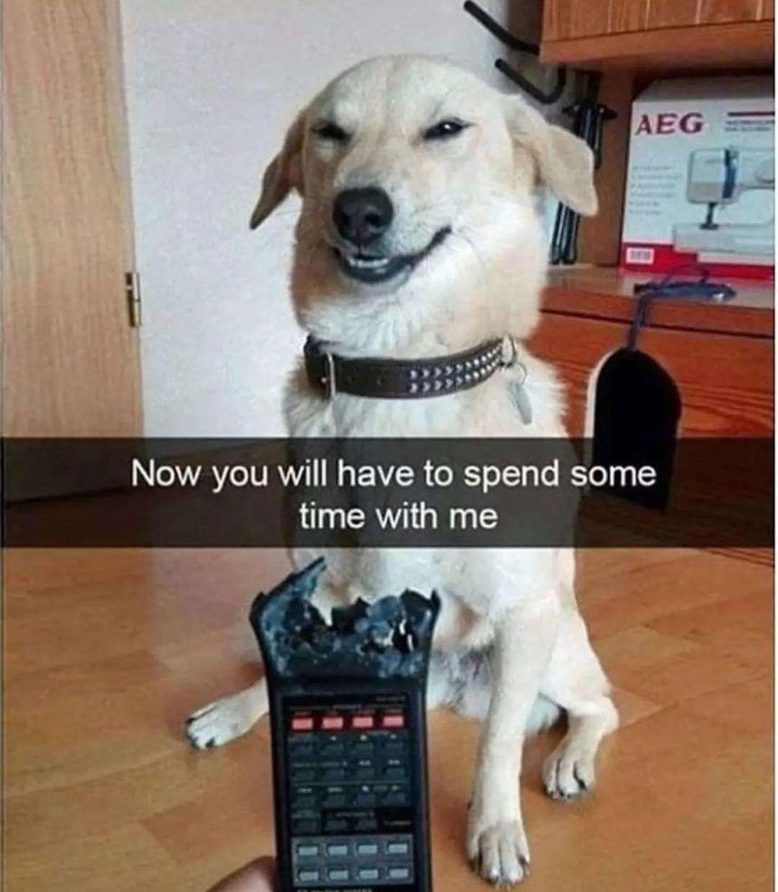 Hilarious Gog memes