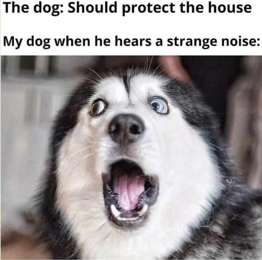 shocking husky meme