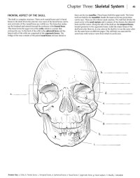 Anatomy And Physiology Coloring Workbook Answers Chapter 11