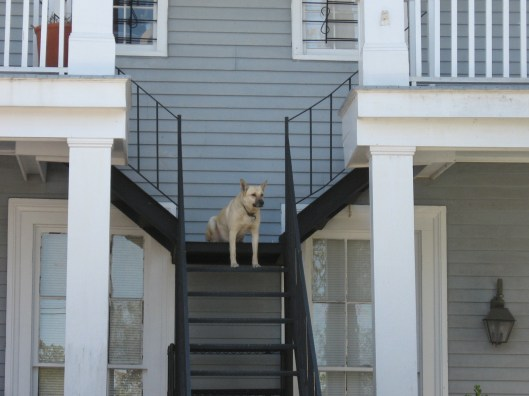 New Orleans dog, 2010